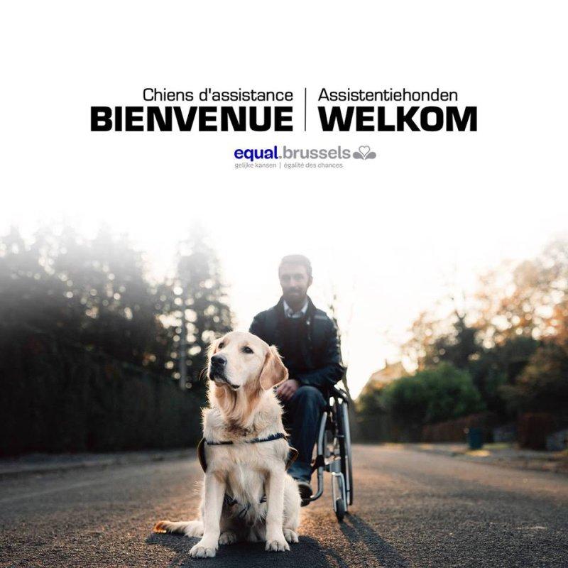 Le chien d'assistance : nouvelle campagne bruxelloise